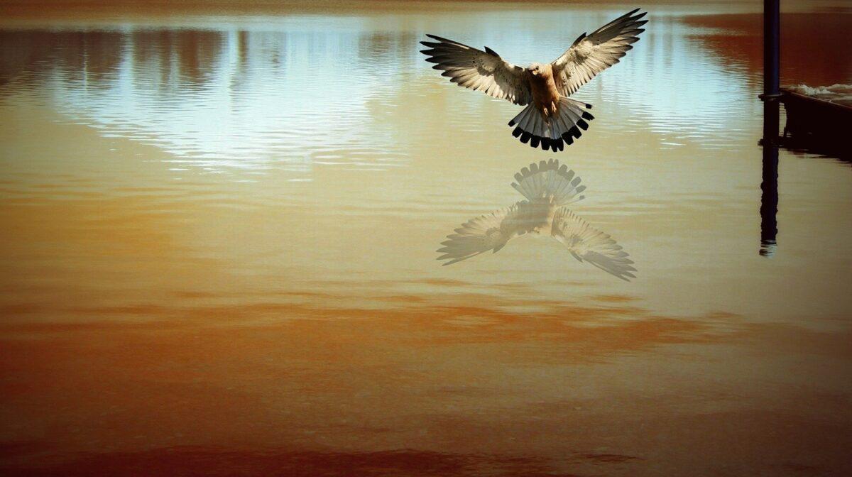 Spiritualiteit en bewustzijn als bron van vrijheid
